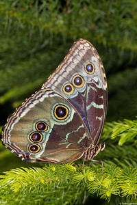 Butterfly Place 1