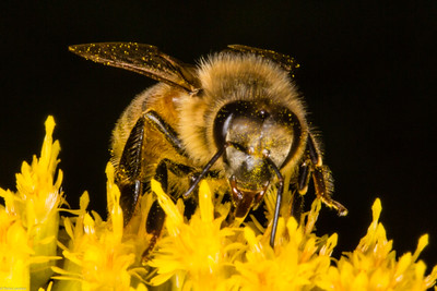 Pollinator 3