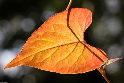 Pointing Towards Fall?