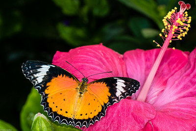 Butterfly Place 9