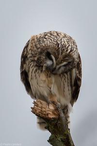 Talon or Toothpick