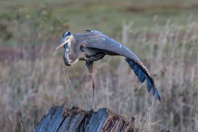 Avian Yoga