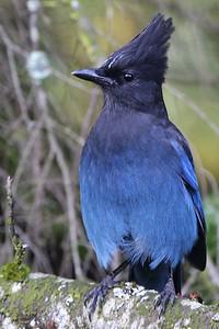 Birdfeeder Raider