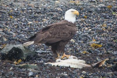 Eagle's Dinner