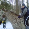 ty- horse 3-2010