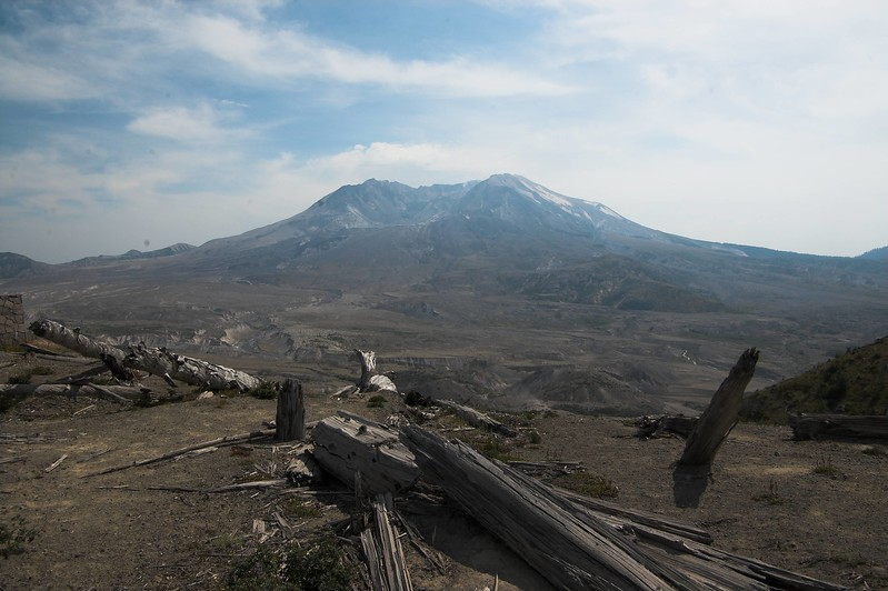 Fallen trees in the foreground with Mt St Helens in the background.  The trees were blown over during the 1980 eruption.