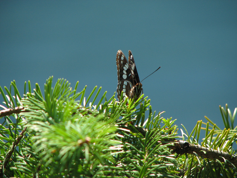 This butterfly kept us company for a while