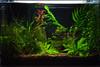 work-aquarium-3-15-2002