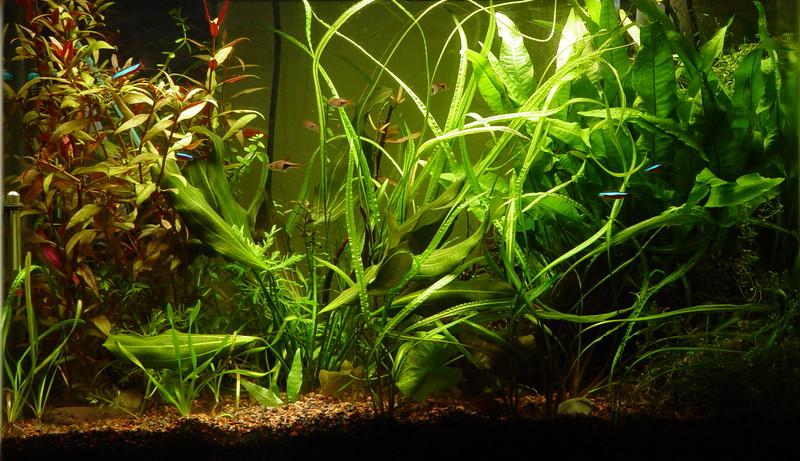 aquarium-11-3-2002