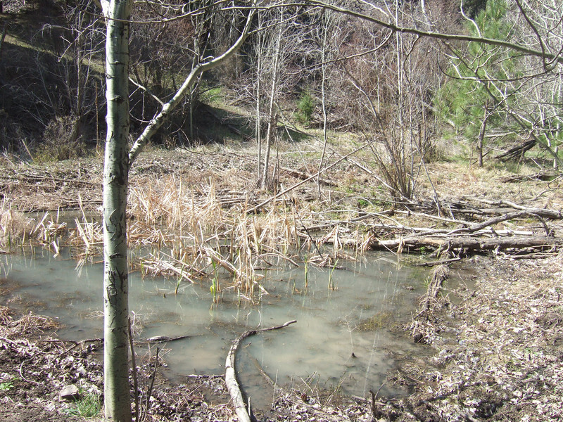 Wetland on property from spring run off