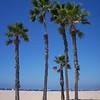 Palm Trees Los Angeles
