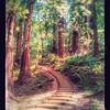 Muir Woods - Art Style