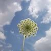 Wildflower Skyview