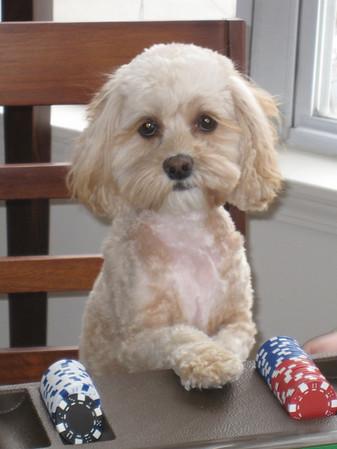 Olive - the wonder puppy