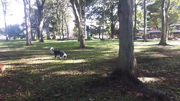 """Vicki Skinner's """"Living Life in Costa Rica"""" blog - The dogs gather around 7-8am daily to run & play at Parque del Cafe in Rohrmoser!"""
