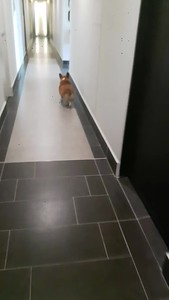As we get off the elevator I'm racing Vicki home as I KNOW she'll have a treat for me!!