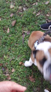 See how good I am with my new buddy Capone (he's such a show-off with all his tricks!)