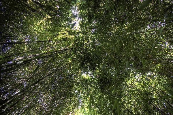 Bamboo HDR