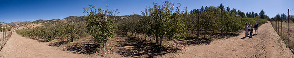 Apple Orchard (Julian, CA)