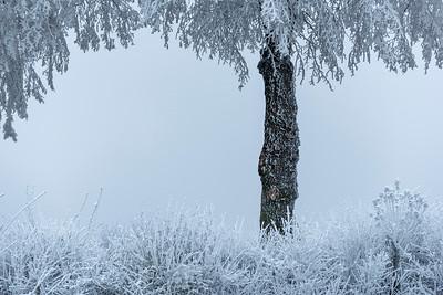 Winter in Arras