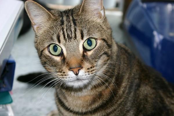 Jan. 2004 - Ollie B'olly -0r 0llie-Gator Biter Johnny Rook Monster cat...