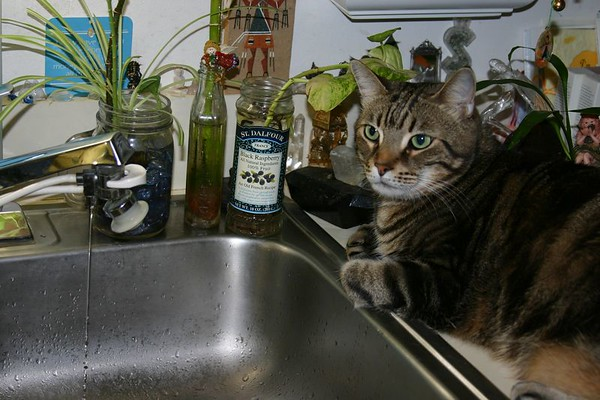Oct. 6th, 2004 - Ollie's Story about Drinking Water  right out of the Kitchen Sink !
