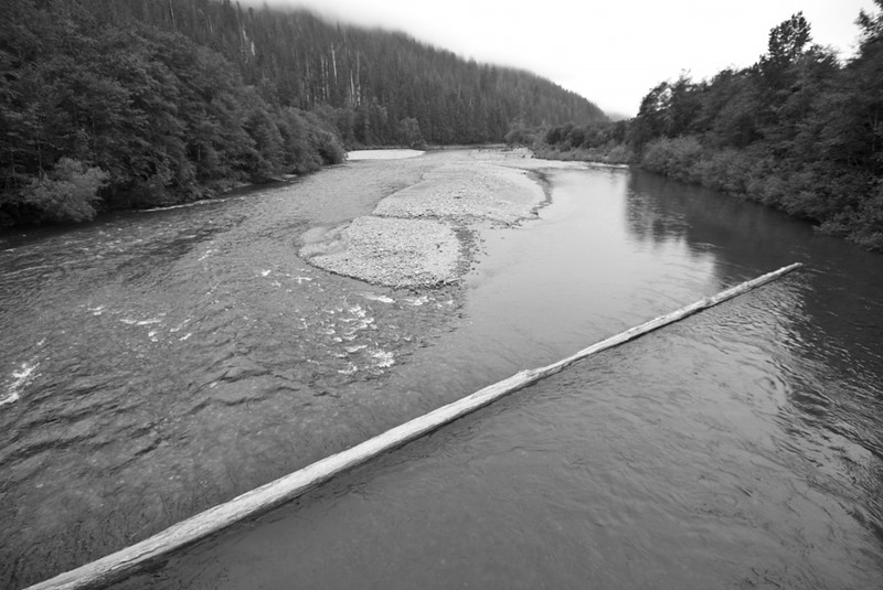 Log, Quinault River
