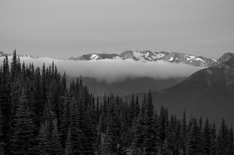 Trees, Clouds, and Mountains from Blue Mt.