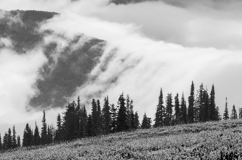 Low Clouds Hurricane Ridge