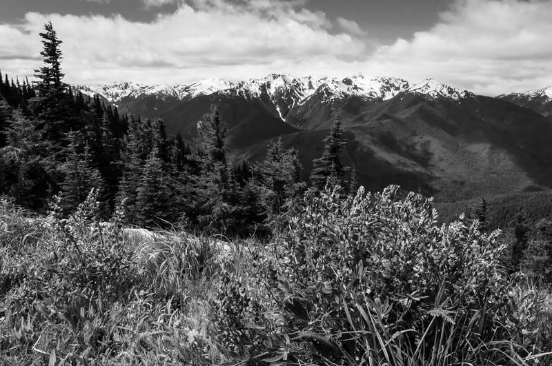 Wildflowers Hurricane Ridge