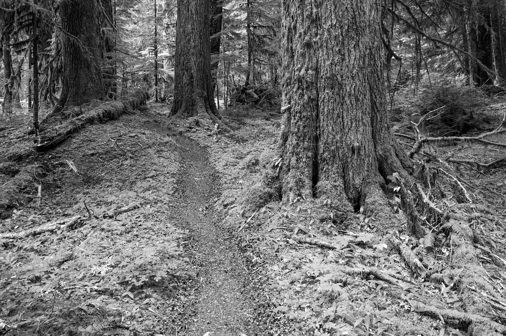 Lovers Lane Trail