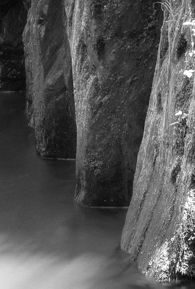 Canyon Wall, East Fork Quinault River
