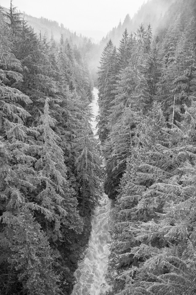 Carbon River and Trees