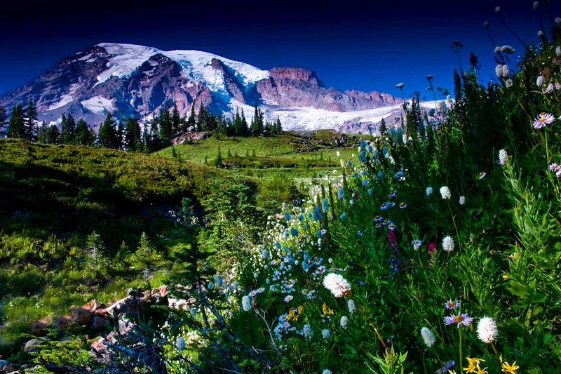 Mt Rainier Wildflowers - Mt Rainier National Park, Washington - Andrew Ehrlich - September 2008