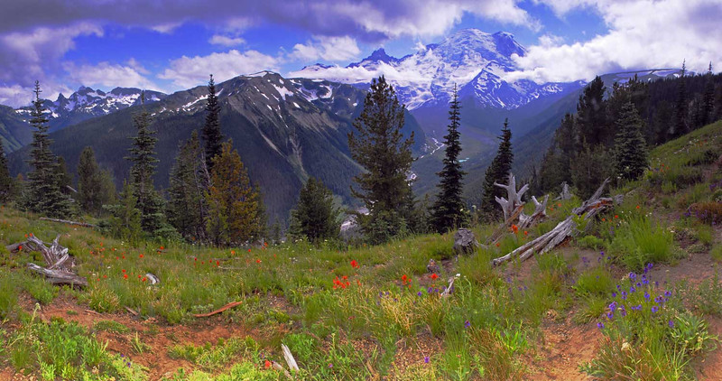 Mt Rainier Panoramic - 5 vertical images - Mt Rainier National Park - Doug Beezley - July 2008