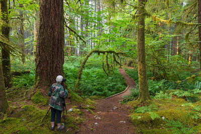 Ancient Groves Trail