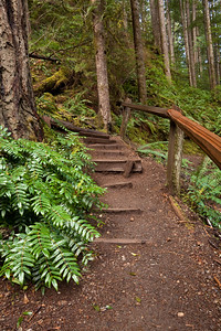 Trail leading to the upper view point of Marymere Falls
