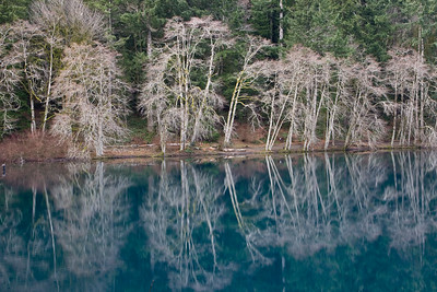Reflections on Lake Crescent