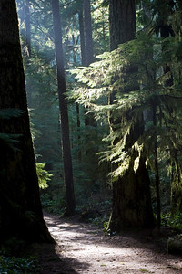 Trail leading to Marymere Falls