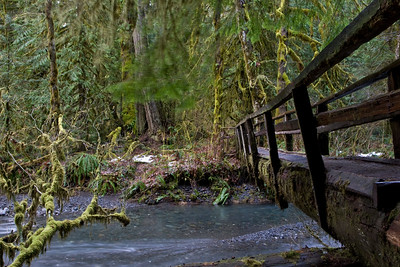 Log bridge over Barnes Creek on trail leading to Marymere Falls