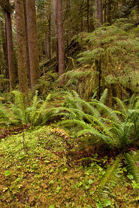 Forest along trail leading to Marymere Falls