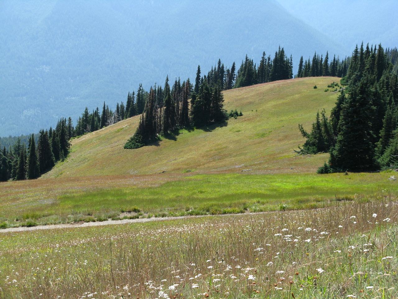 Beautiful alpine meadow.