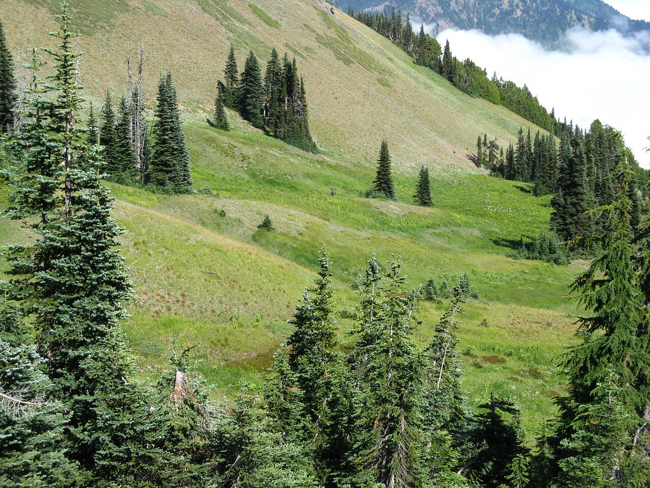 Another meadow below the trail.