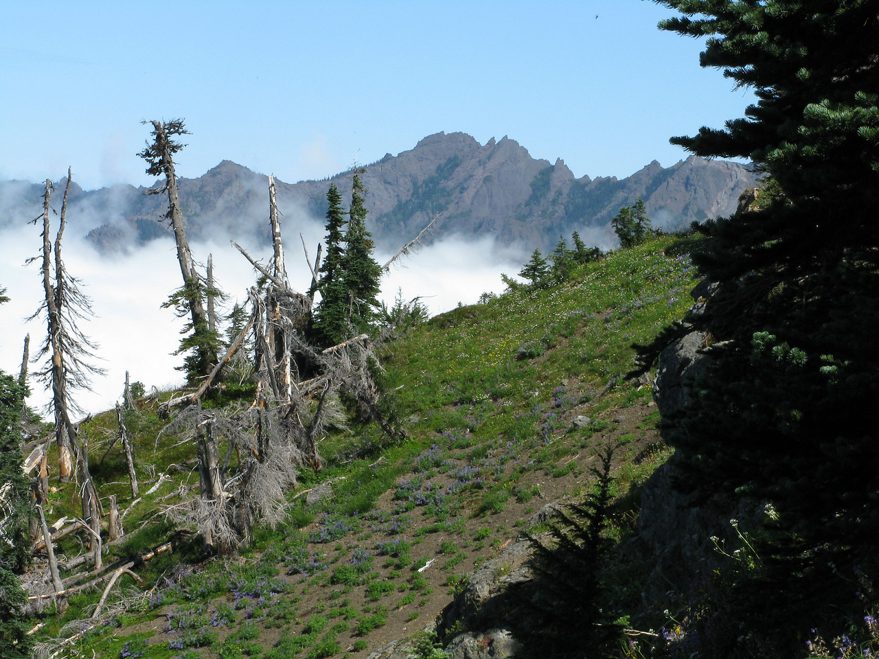 Mount Angeles in the distance.