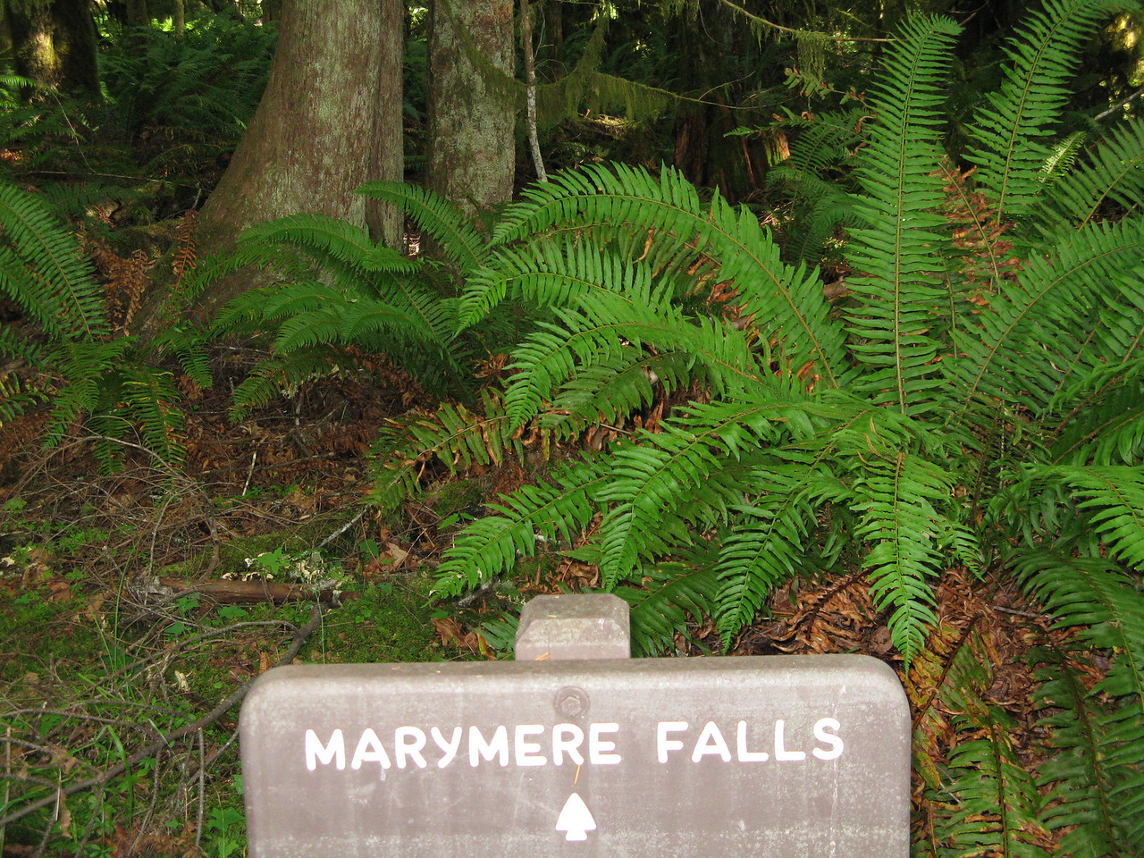 Marymere Falls was a short 1.5 mile (5 kilometer round trip) saunter along Barnes Creek.  This was a year round volkswalk sponsored by the Olympic Peninsula Explorers Volkssporting Club of Port Angeles.