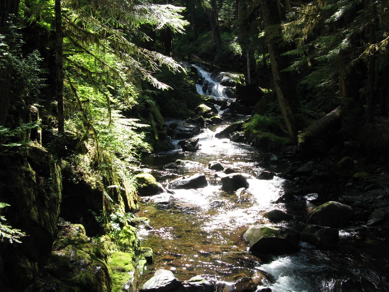 A creek coming down the hillside.