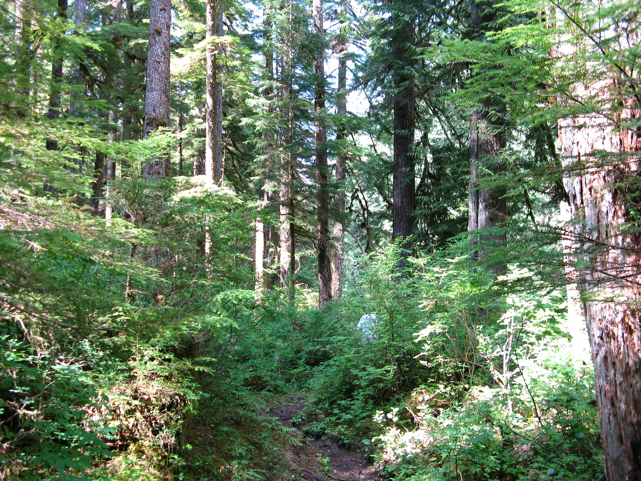 The Lovers Lane Trail was more rugged than the trail on the east side of the river.