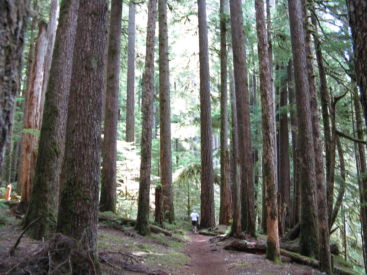 After leaving the campground, we travelled most of the rest of the way in old growth evergreen forest of fir and spruce.