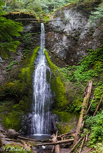 Marymere Falls (90 Feet) -- Photo is a pano of seven different photos.  Only photo-op was close-ups.