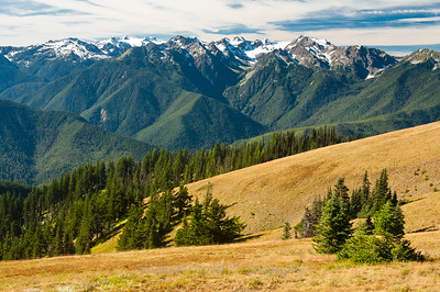 Iconic Hurricane Ridge View